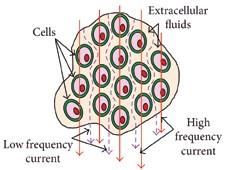 Abb . 2a Idealisierte Bioimpedanz biologischer Gewebe in Abhängigkeit von der Frequenz. Die Zellmembran wirkt als Kondensator, der die niedrigen Stromfrequenzen nicht durchlässt, d.h. höhere Bioimpedanz