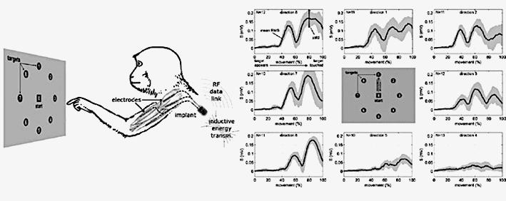 Experimentelles Setup zur biologischen Evaluierung des Gesamtsystems. (a) Schematische Darstellung des Versuchsaufbaus, (b) Korrelation der Armbewegung mit den erfassten myoelektrischen Signalen, aus (Lewis S, Russold FM, Dietl H, Ruff R, Cardona J, Hoffmann K-P, Abu-Saleh L, Schroder D, Krautschneider W, Westendorff S, Gail A, Meiners T, Kaniusas E. Fully implantable multi-channel measurement system for acquisition of muscle activity. IEEE Transactions on Instrumentation & Measurement, 2013; 62 (7): 1972-1981)