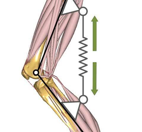 Knieextension beim Treppenaufstieg